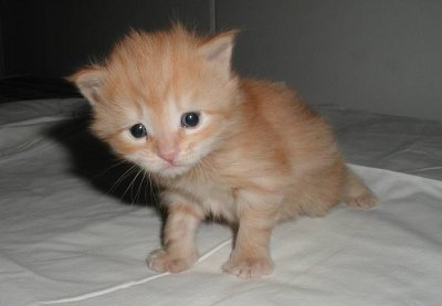 Kitten-pictures-73_medium