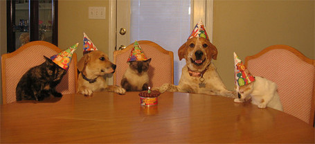 Dog-party_medium