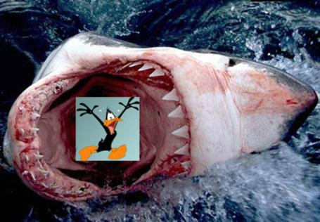 Shark_eating_daffy_medium
