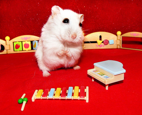 Hamster_by_a_piano_medium