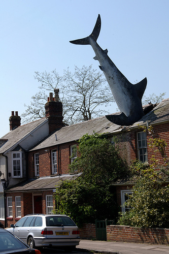 Sharks_on_the_roof_medium