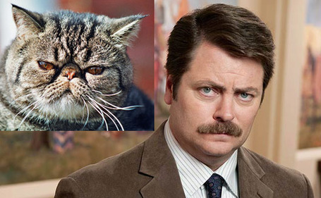 Ronswanson-cat_medium