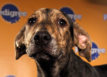 Puppy-bowl-2012-5_medium