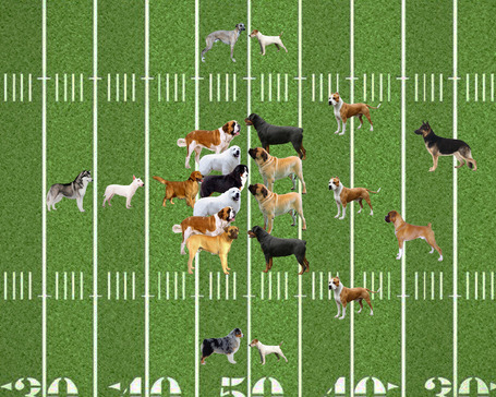 Dog-football_medium