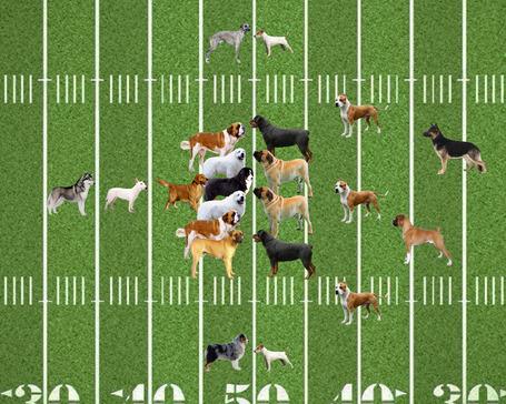 Dog-football_medium