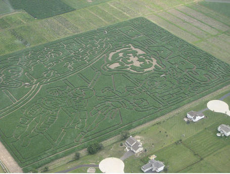 Cornmaze2_medium