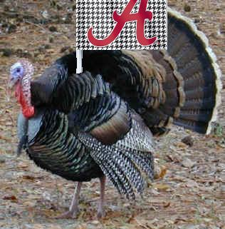 Bama_turkey_medium