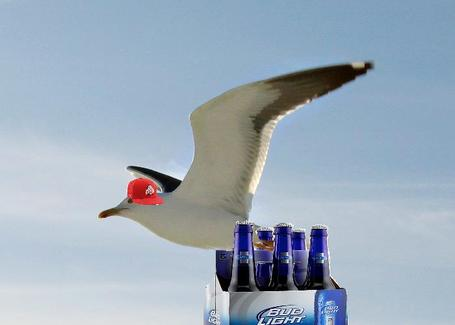 Ohio_state_gull_medium