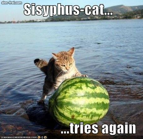 Funny-pictures-sisyphus-cat-watermelon-water_medium