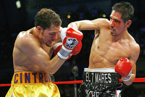 Box_margarito_cintron_300_medium