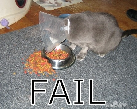 Failed-cat_medium