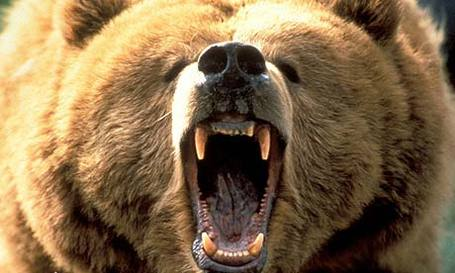 Bear10b_medium