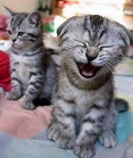 Laughter-funny-cat-laugh_medium