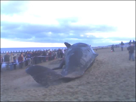 Skeg_whale_adam_470x352_medium