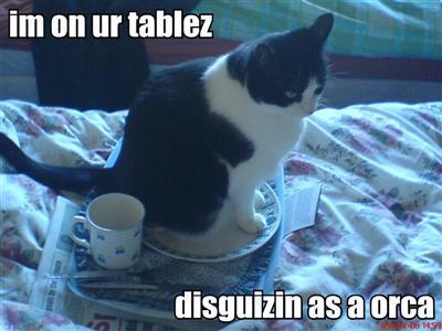 Im-on-ur-tablez-disguizin-as-a-orca_medium