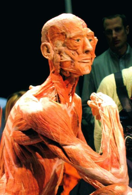 Bodyworlds-man_medium
