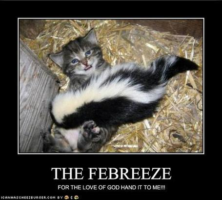 Funny-pictures-kitten-begs-for-the-febreeze_medium