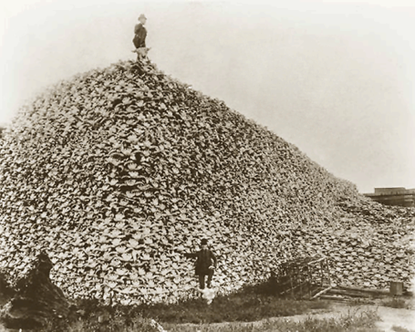 Bison_skull_pile__ca1870-772015_medium