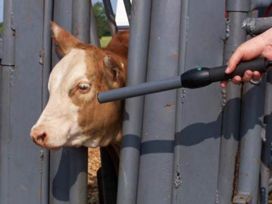 Internet of cows: technology could help track disease, but ...